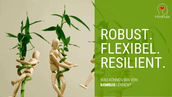 Stressmanagement Seminar : Die Bambusstrategie - Was wir vom Bambus lernen können