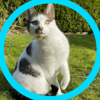 Hirnpuls-Team-Kitty the Cat